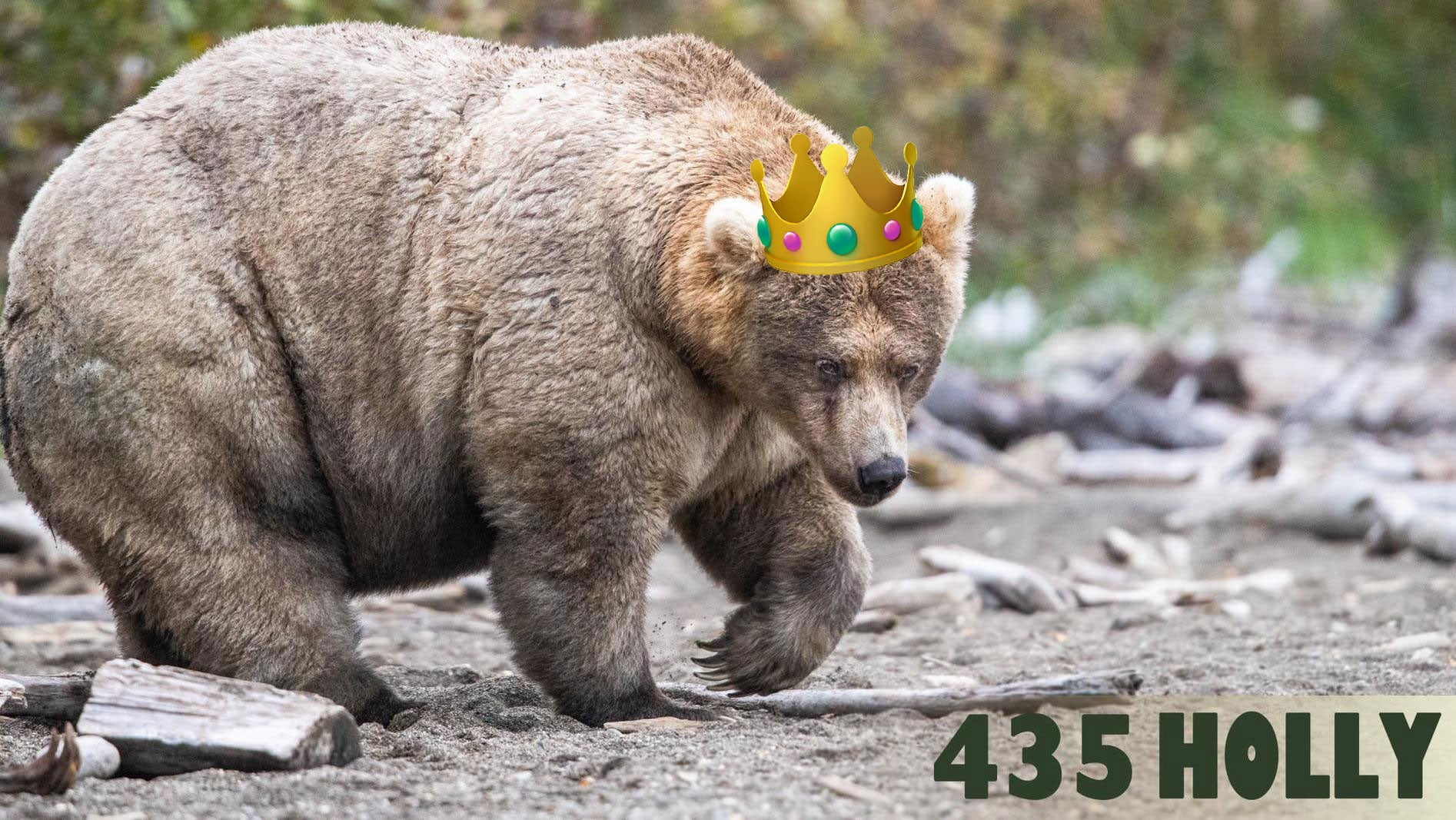 Bow Down To Holly, Your Fat Bear Week Champion Of 2019