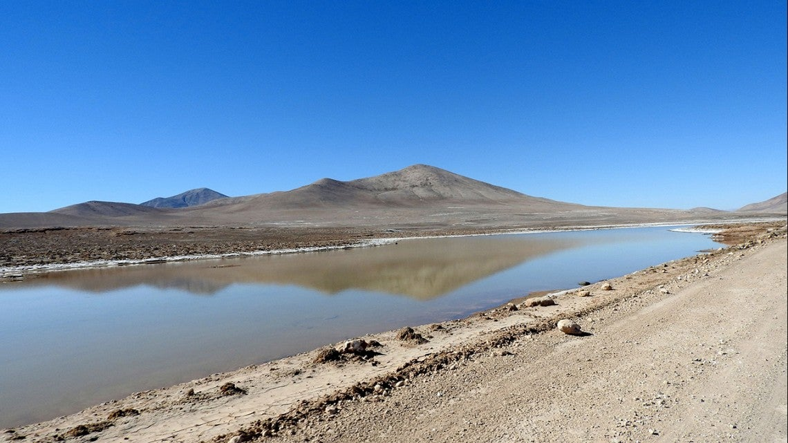 First Major Rain In Centuries Triggers Wave Of Death In Earth's Driest Desert