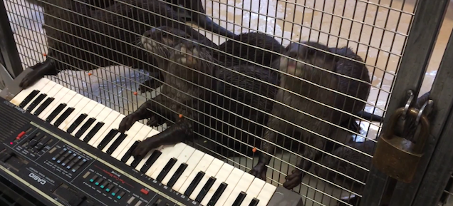 When otters play piano they compose horror movie scores