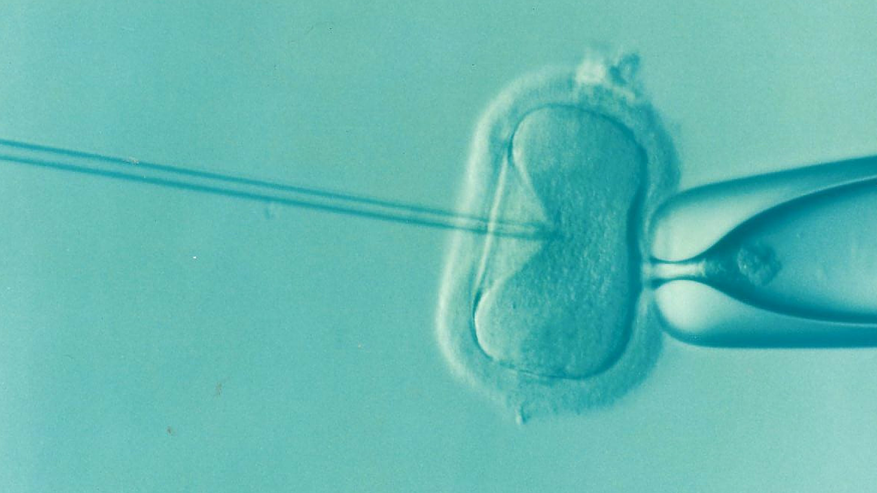 Dutch Fertility Clinic May Have Mixed Up Sperm For Dozens Of Couples