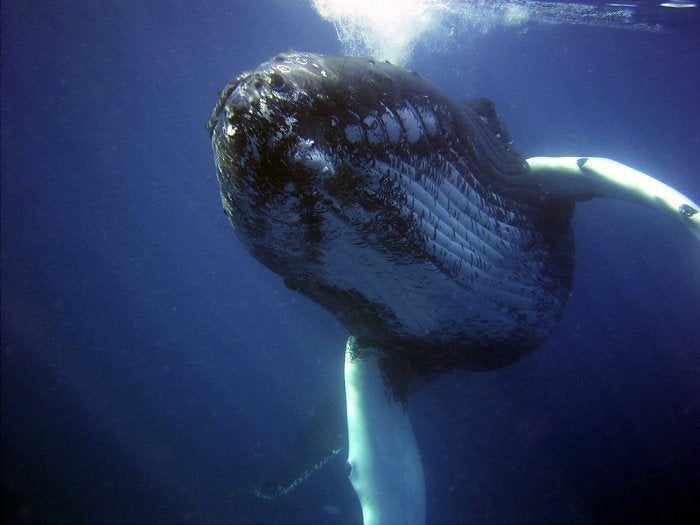 Humans Killed Nearly 3 Million Whales in the 20th Century