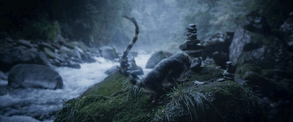 A Haunting Short Film Set in a World Where Evolution Happens Rapidly — And Is Often Deadly