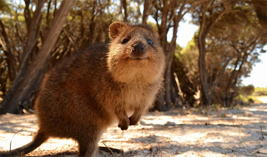 Australian Animals That Won't Kill You, Ranked