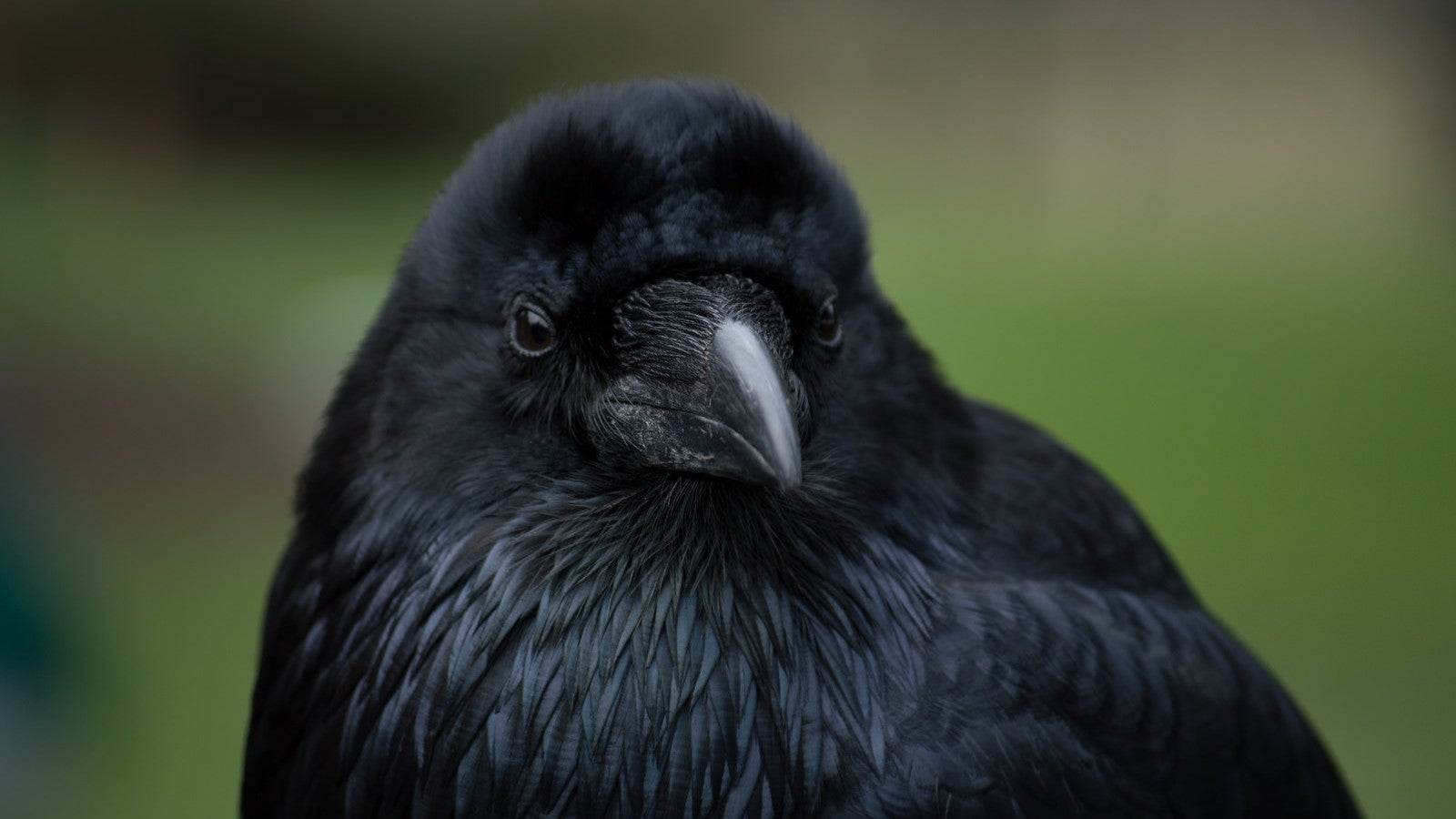 Ravens Remember If You Were A Dick To Them