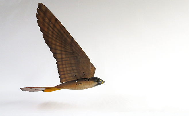This 3D-Printed Falcon Is a Flying Robot Scarecrow