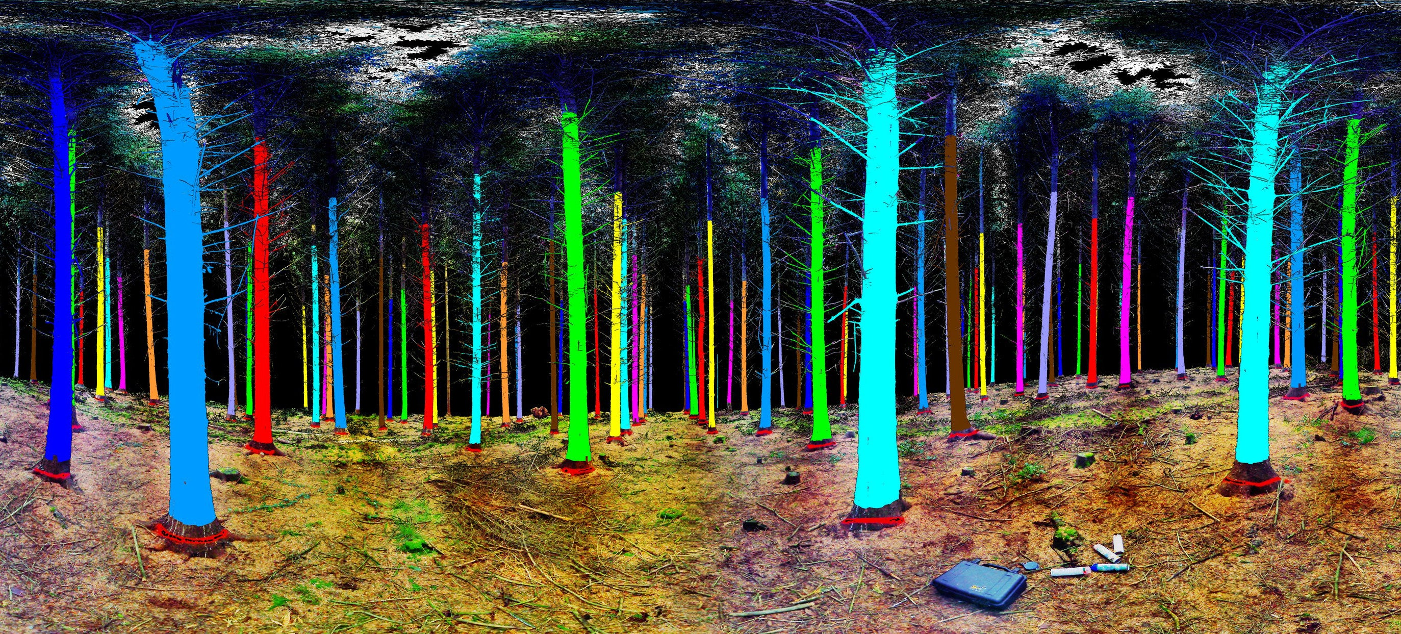 This Is What You See When You Scan a Forest With Lasers