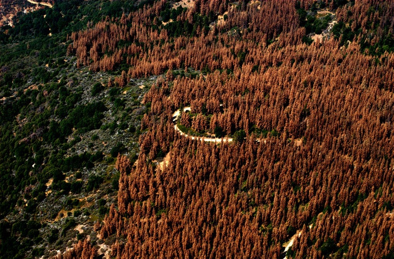 100 Million Goddamn Trees Are Dead In California