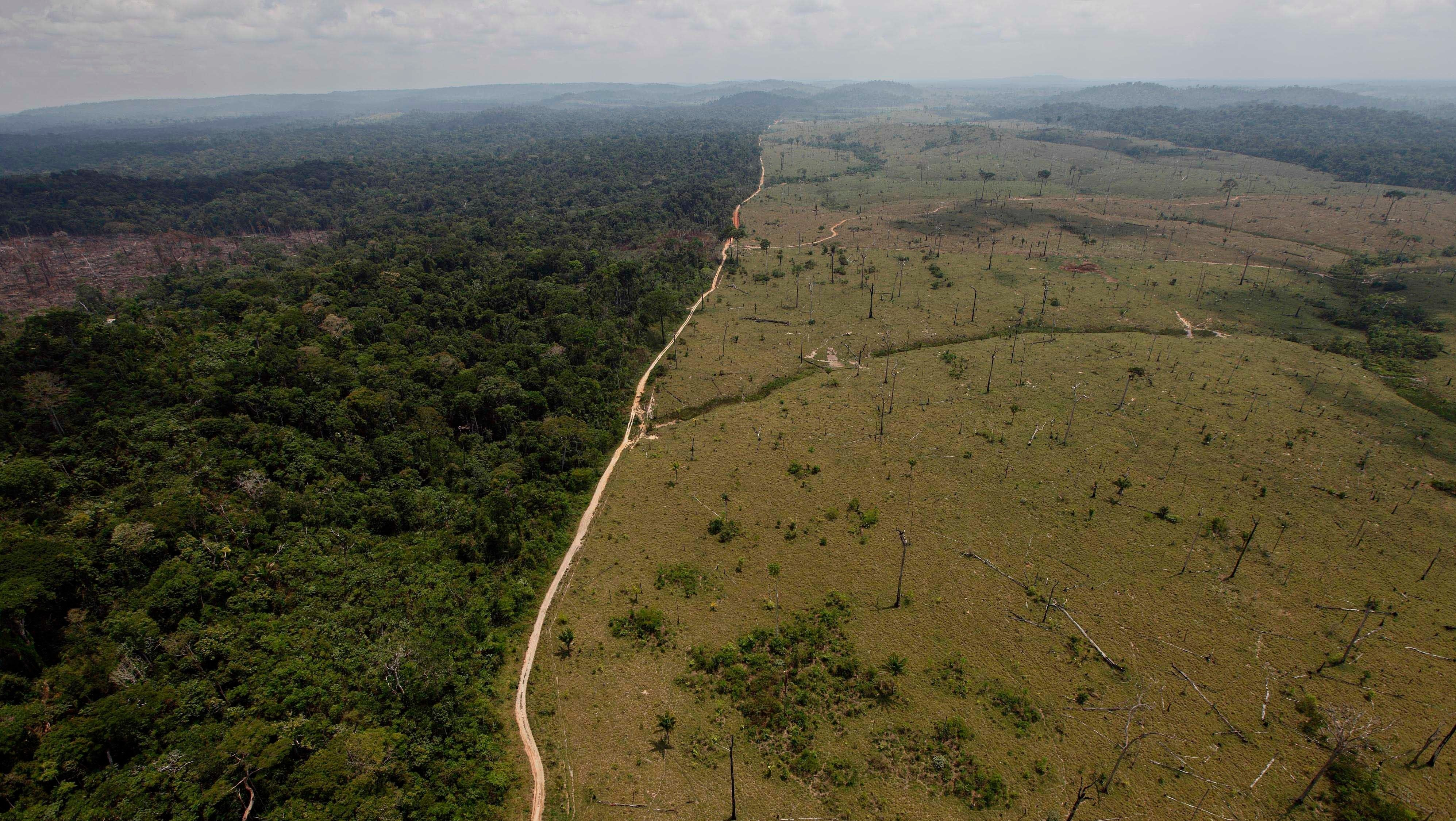Deforestation And Climate Change Could Split The Amazon Rainforest In Two, Study Finds
