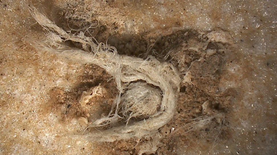 Fascinating Discovery Suggests Neanderthals Invented String