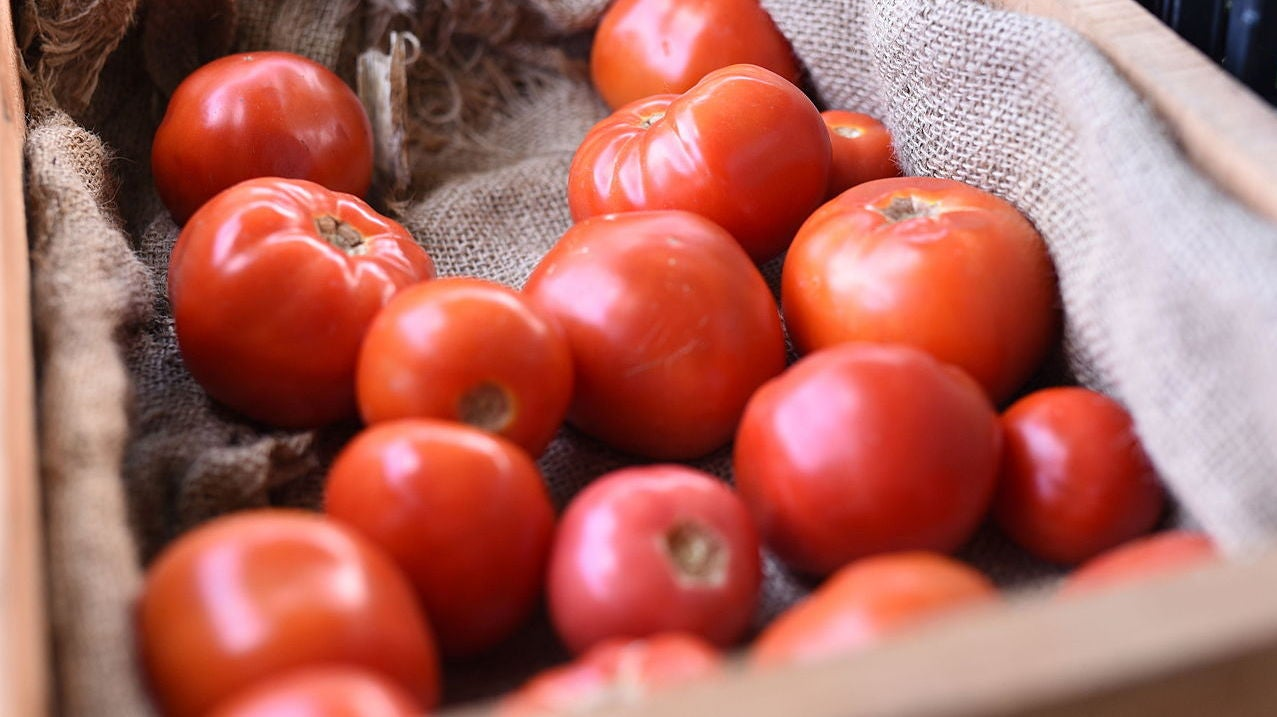 Let's Make Tomatoes Spicy With Genetic Engineering, Scientists Proclaim