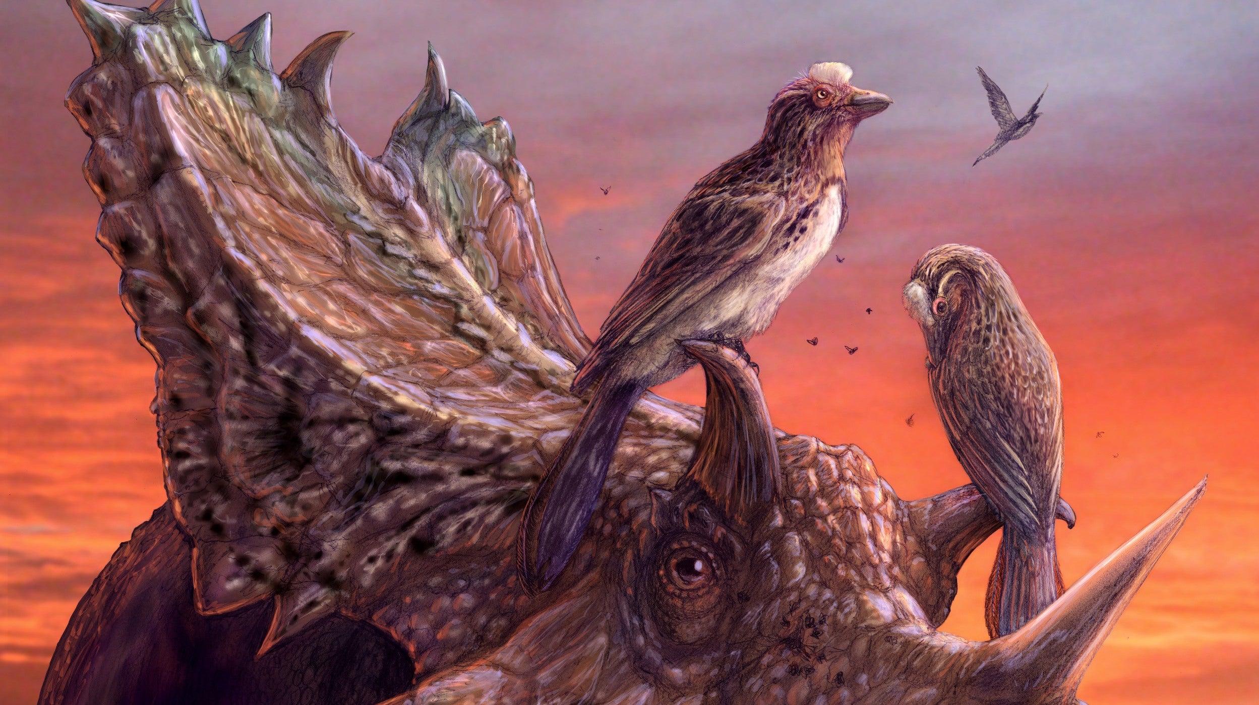 Incredible Bird-Dinosaur Specimen Thrills Scientists After 25 Years In Museum Storage