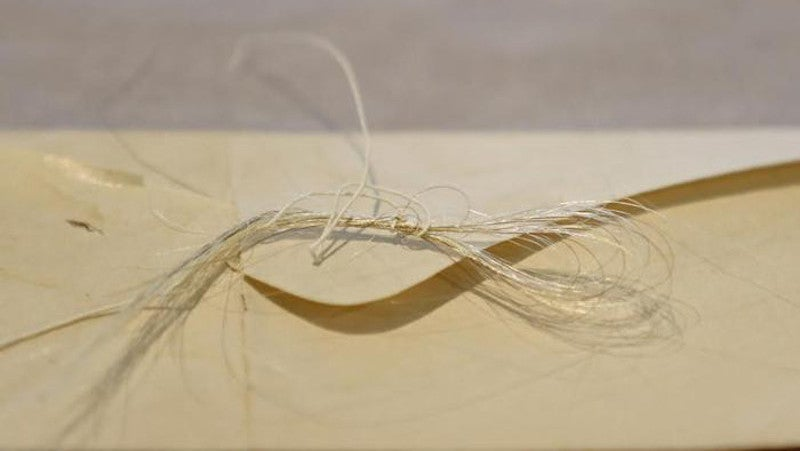 Lock Of George Washington's Hair Found Tucked Inside Old Book