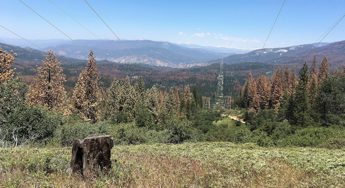 Unprecedented Number Of Tree Deaths In California Points To A Catastrophic Fire Season