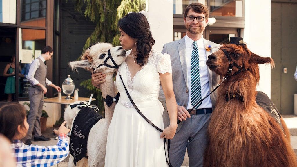 Should You Bring A Llama To Your Wedding?