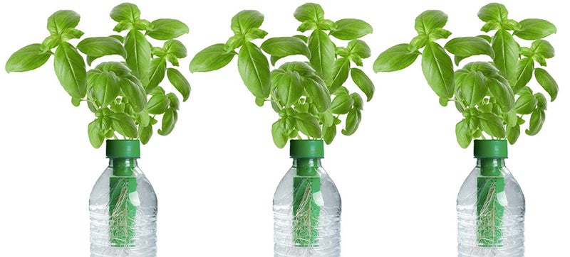 Seed-Filled Caps Turn Plastic Bottles Into Tiny Gardens ...