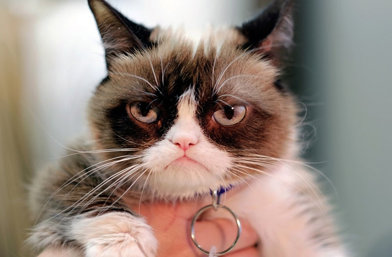 Everyone Involved In This $2.3 Million Grumpy Cat Lawsuit Sucks Except For The Cat