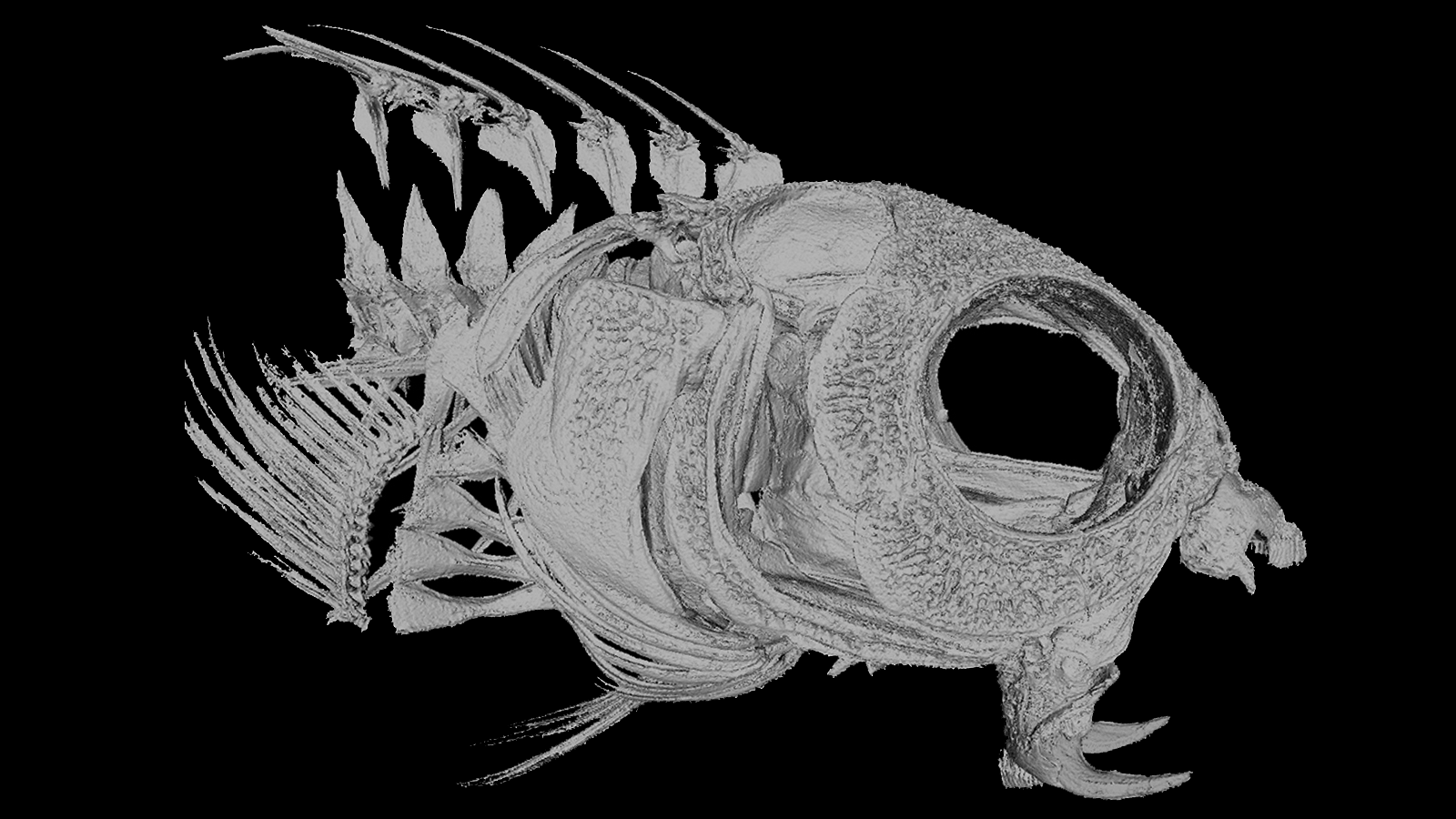 These Fish Inject Predators With Opioid Venom And That Isn't Even The Coolest Part
