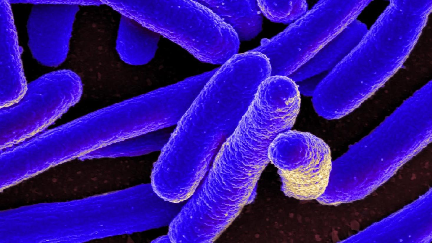 Scientists Create E. Coli With Entirely Synthetic Genome