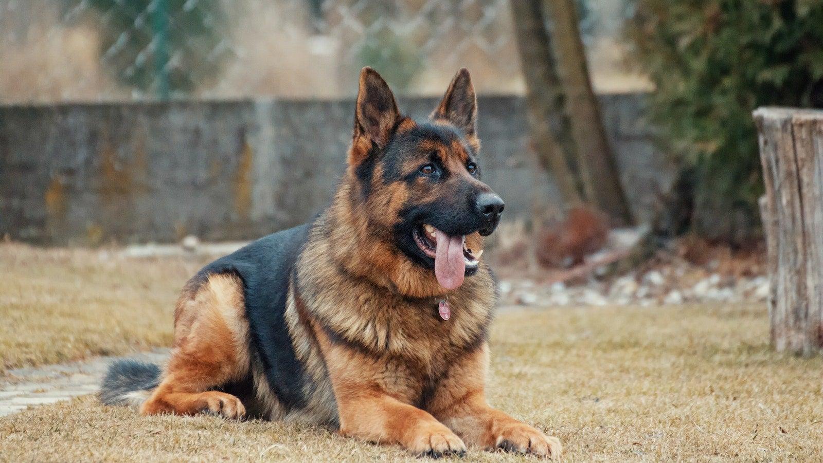 Adopt A Service Dog Who Didn't Quite Make It Through