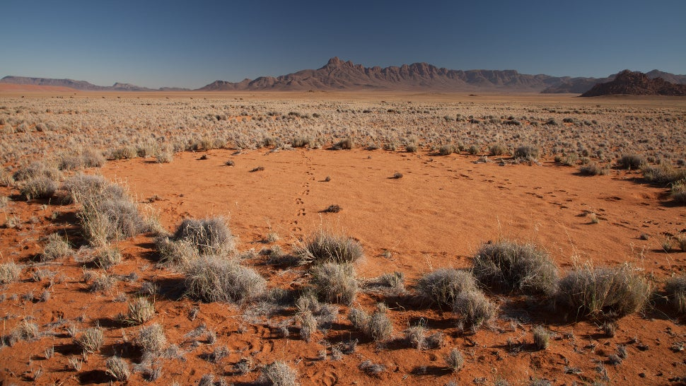 We Finally Know What's Causing Namibia's Mysterious Fairy Circles