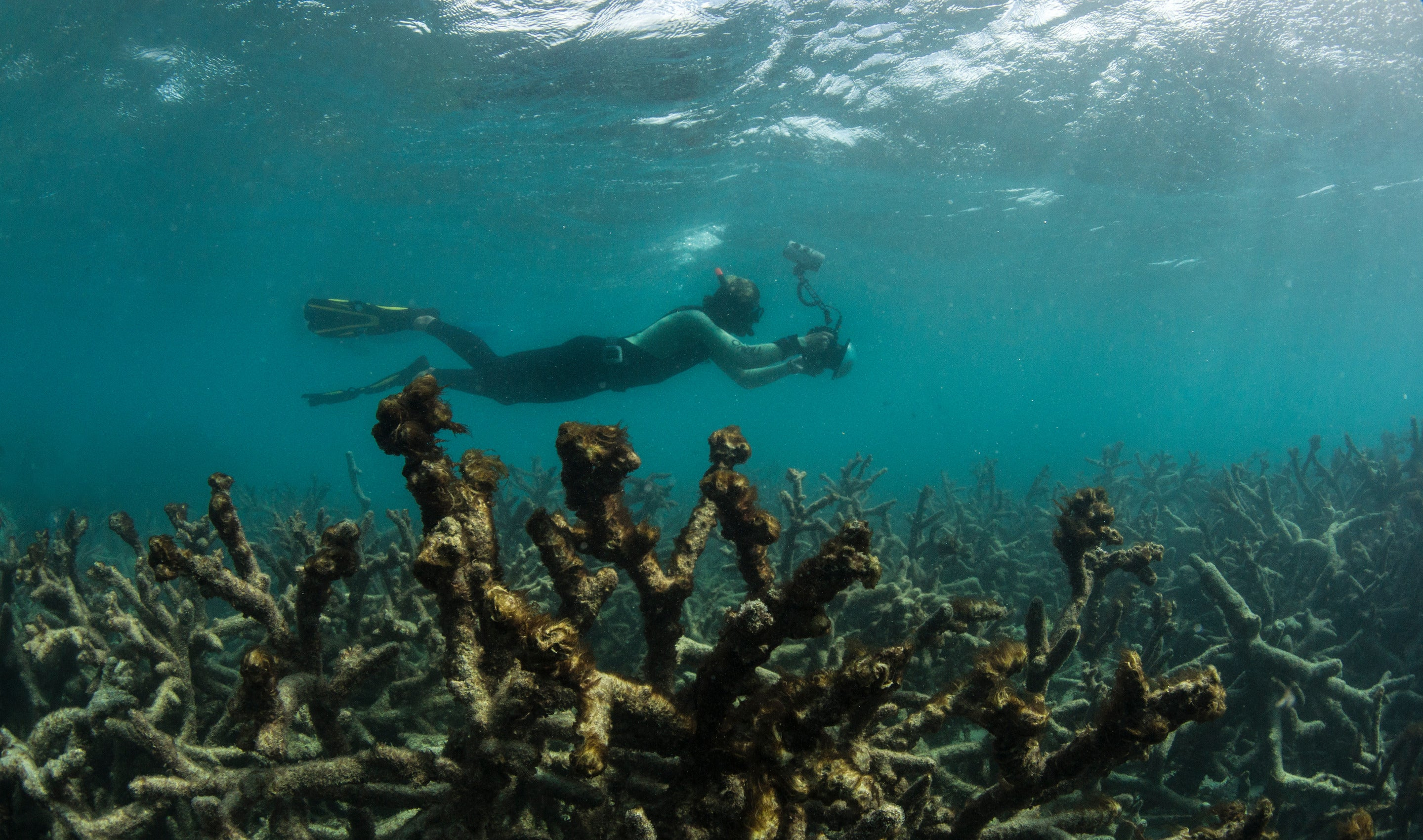 The Worst Coral Die-Off In History Just Got Worse