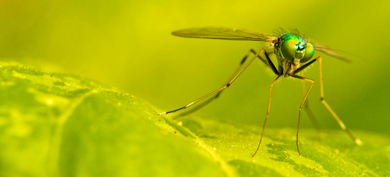 The Many Ways We're Using Mutant Mosquitos To Eradicate Disease