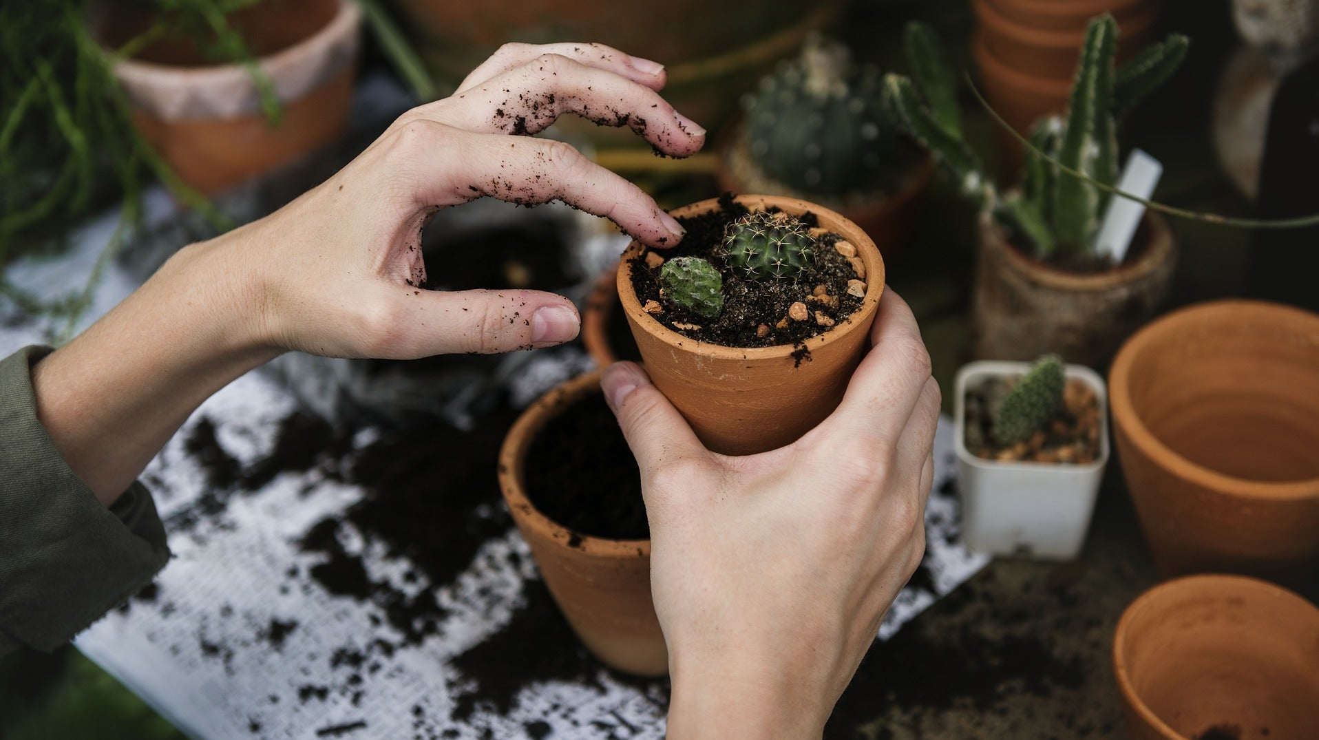 How To Repot Your Plants Without Killing Them