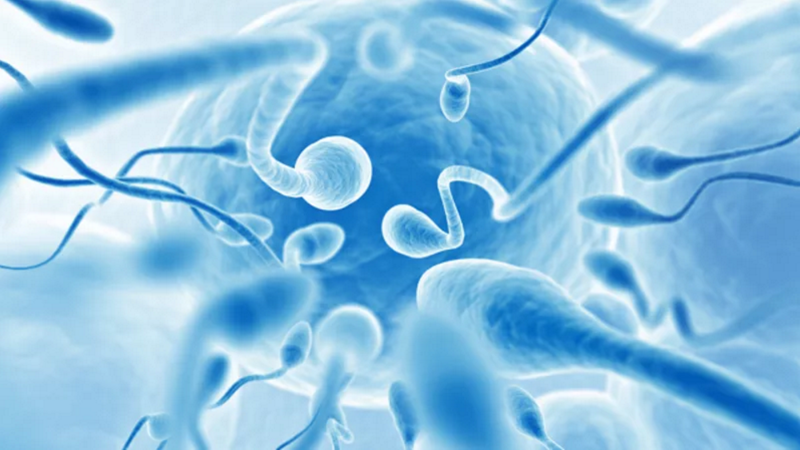 Sperm Counts Have Plummeted Among Western Men, Scientists Confirm
