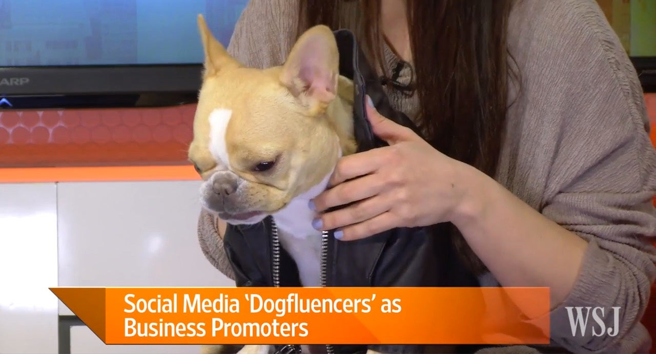 Dog Talent Agency Helps 'Dogfluencers' Advertise Products On Instagram