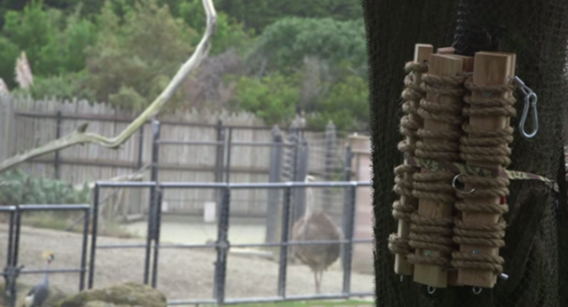 This Custom Poop-Chute Dispenses Droppings for Lions to Play With
