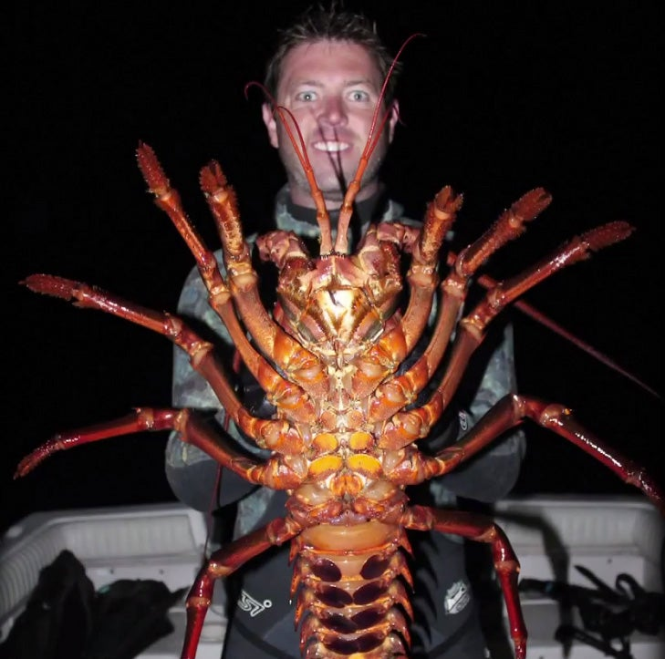 Biologist catches monster 70-year-old lobster in California