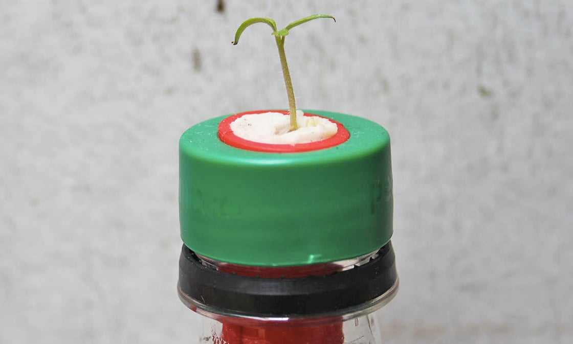 Seed-Filled Caps Turn Plastic Bottles Into Tiny Gardens