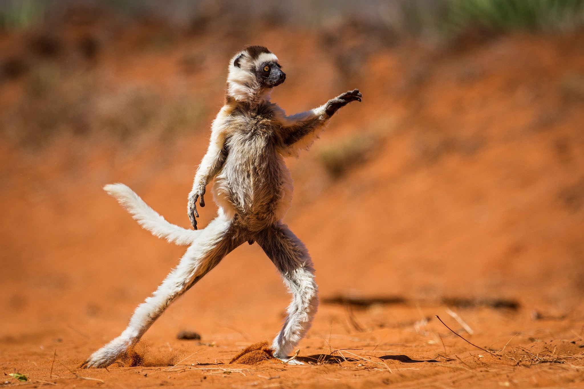These Are the Winners of the 2015 Comedy Wildlife Awards