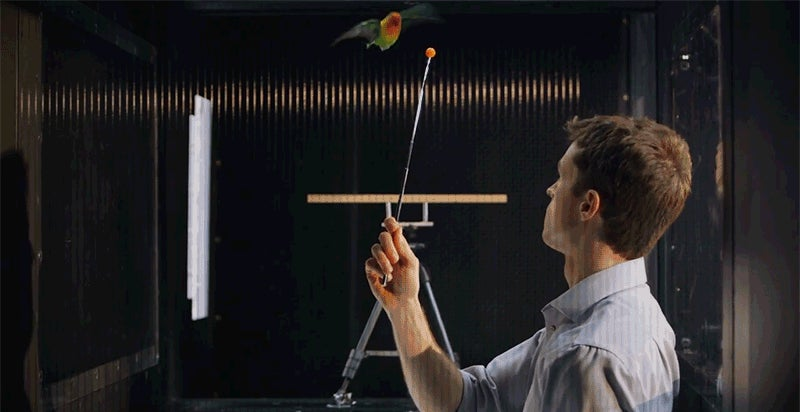 Stanford Built a Turbulent Wind Tunnel for Birds to Help Drones Fly Better