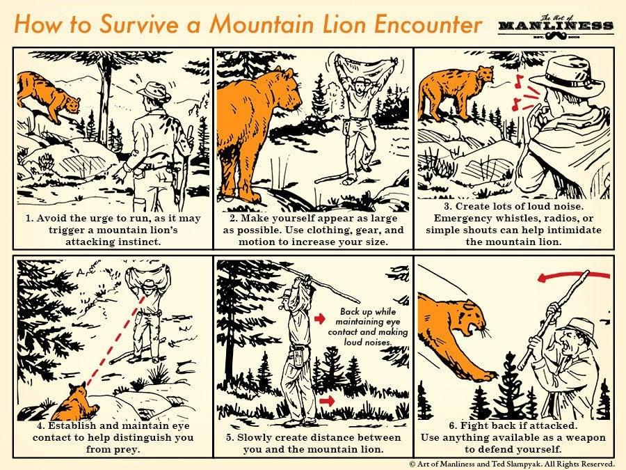 Six Tips for Surviving a Mountain Lion Encounter