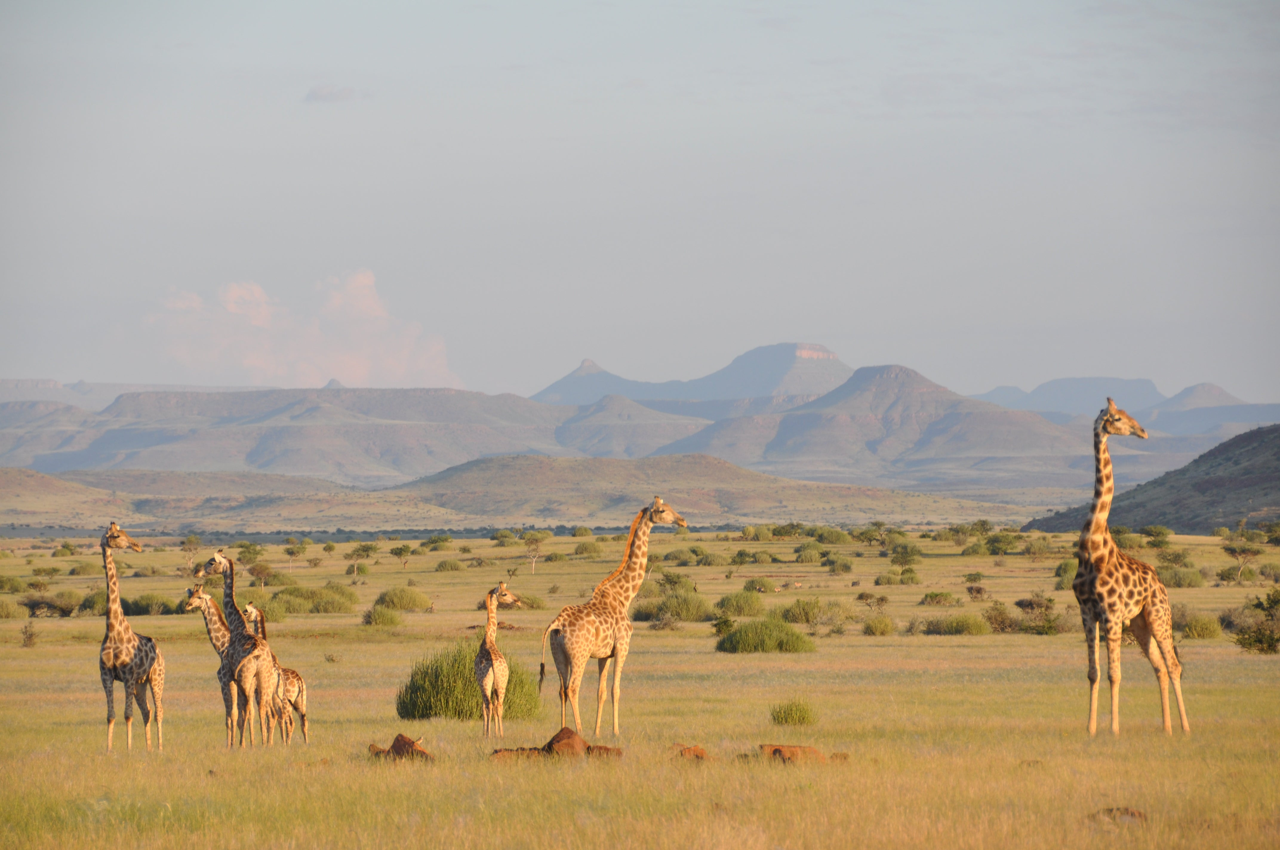 We Just Found Out There's More Than One Species of Giraffe