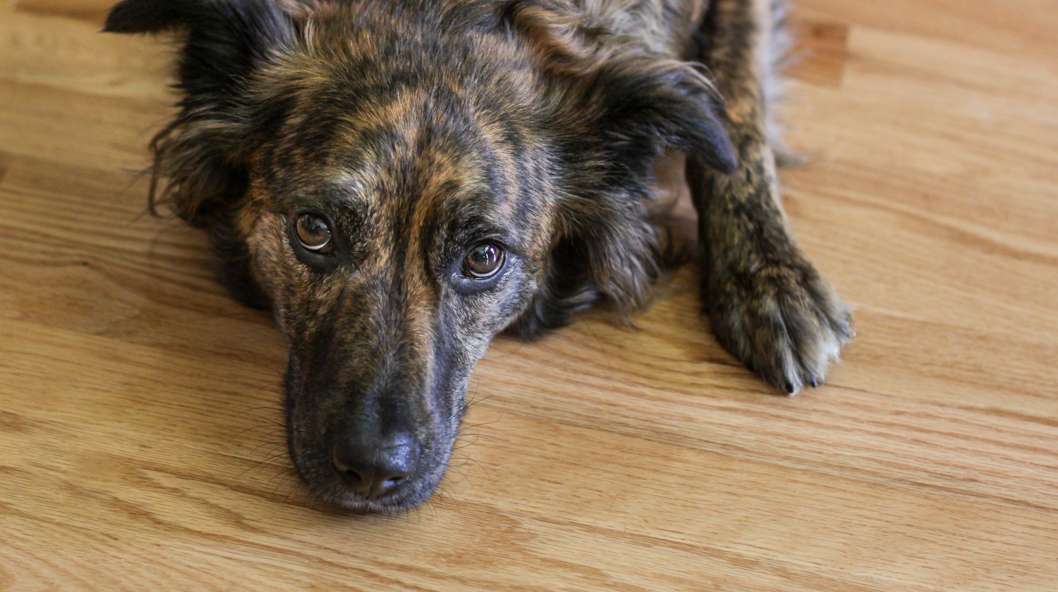 How To Handle Your Pet's Anxiety