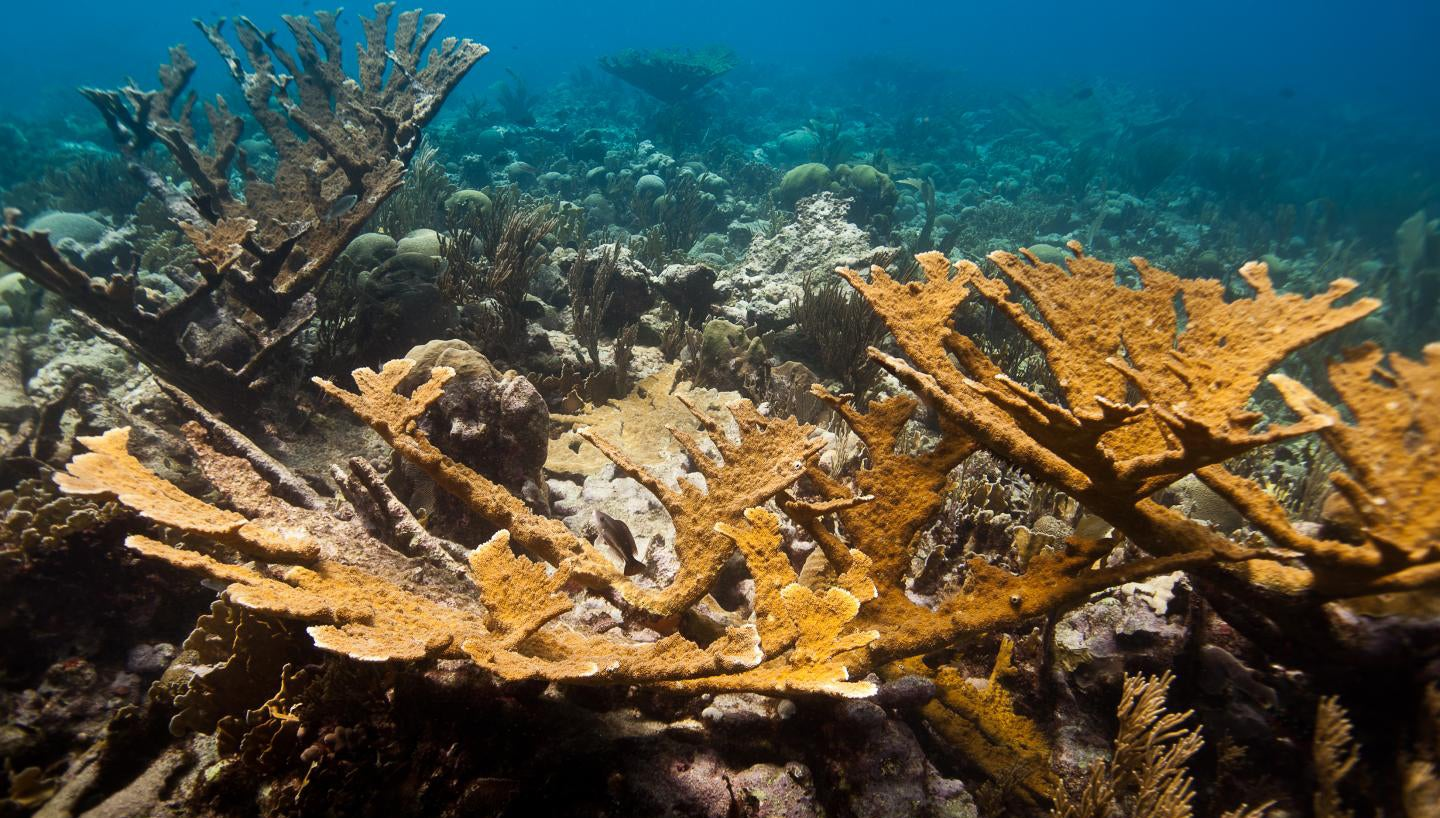 Lab-Grown Coral Is The Latest Hail Mary Plan To Save Earth's Reefs