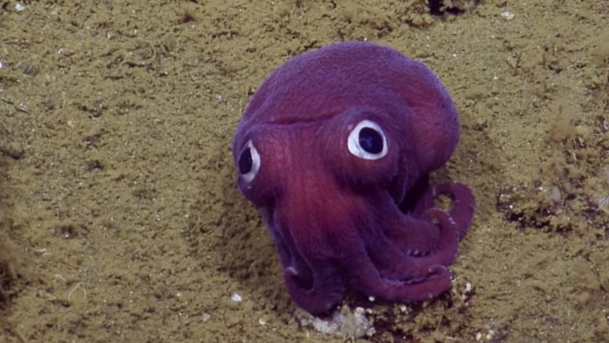 Look At This Googly-Eyed Squid