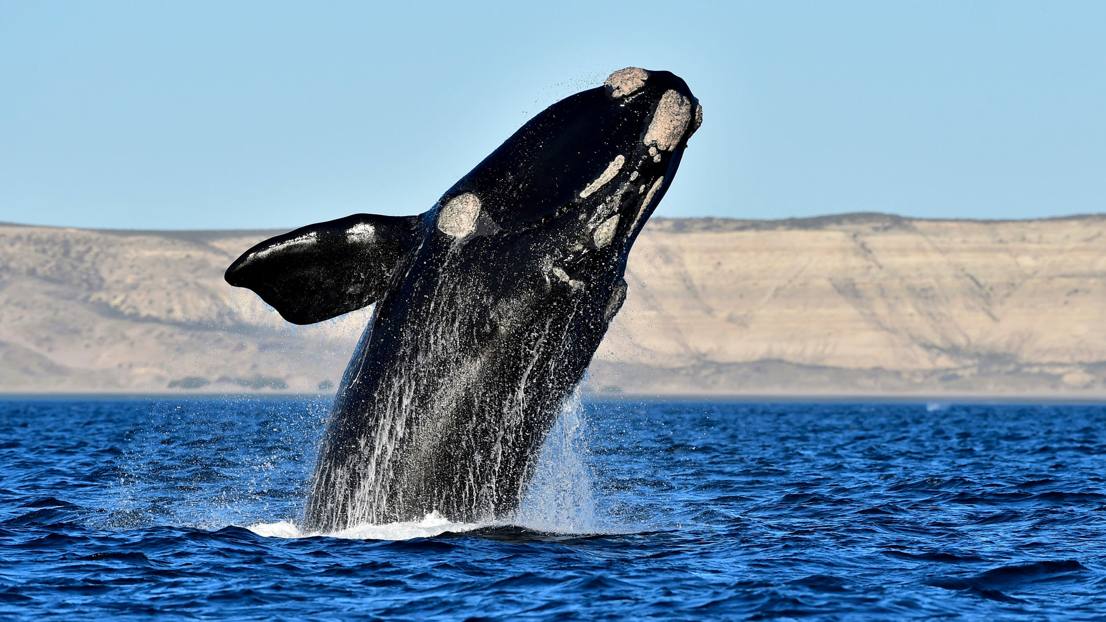 Whales Can Now Be Tracked From Space