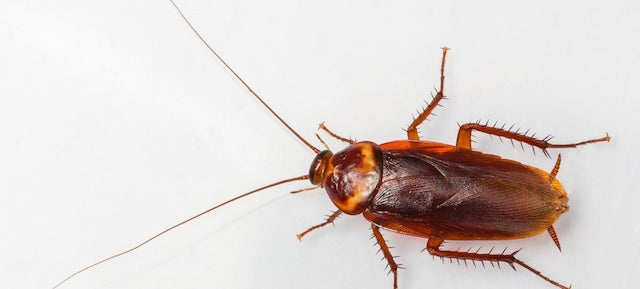 DNA Nanobots Turn Cockroaches Into Living, 8-Bit Computers
