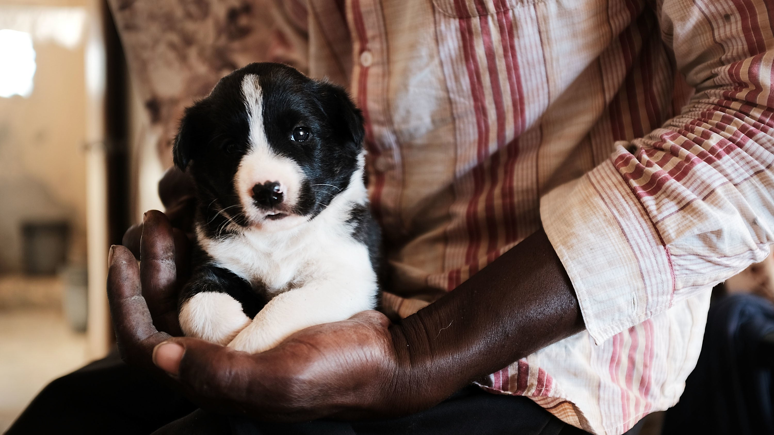 Don't Use DNA Tests To Make Decisions About Your Dog's Health