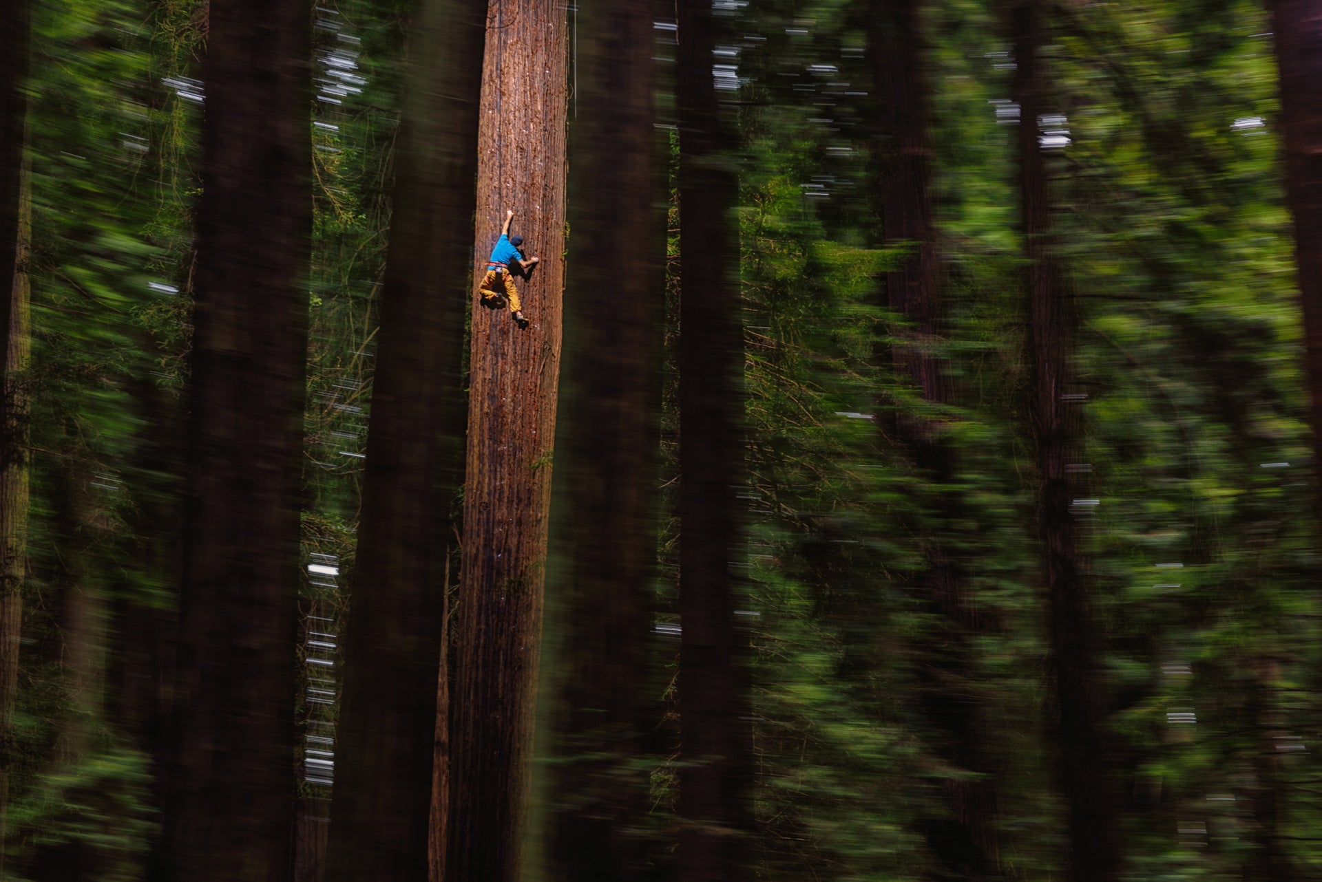 Watch This Guy Free Climb A Giant Redwood