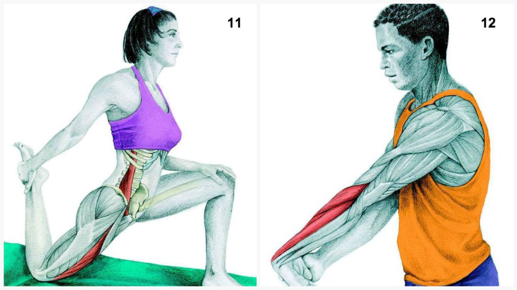 This Guide Shows Which Muscles You Work When You're Stretching