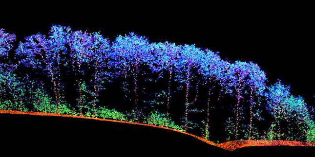 Researchers Are Scanning Forests With Lasers to Monitor Their Health