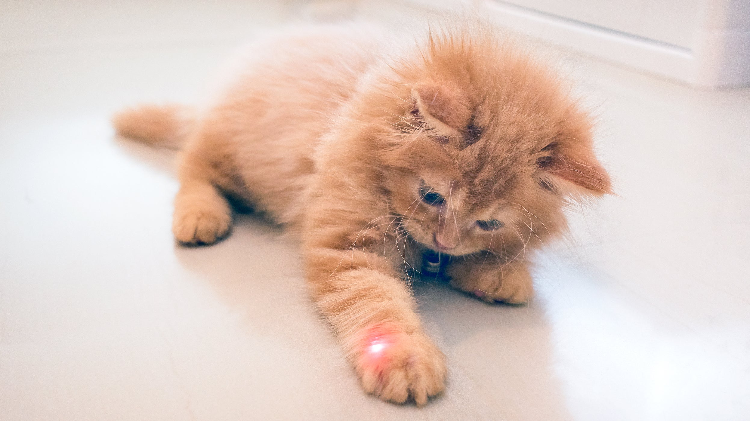 Get Your Kid To Clean Up With A Laser Pointer