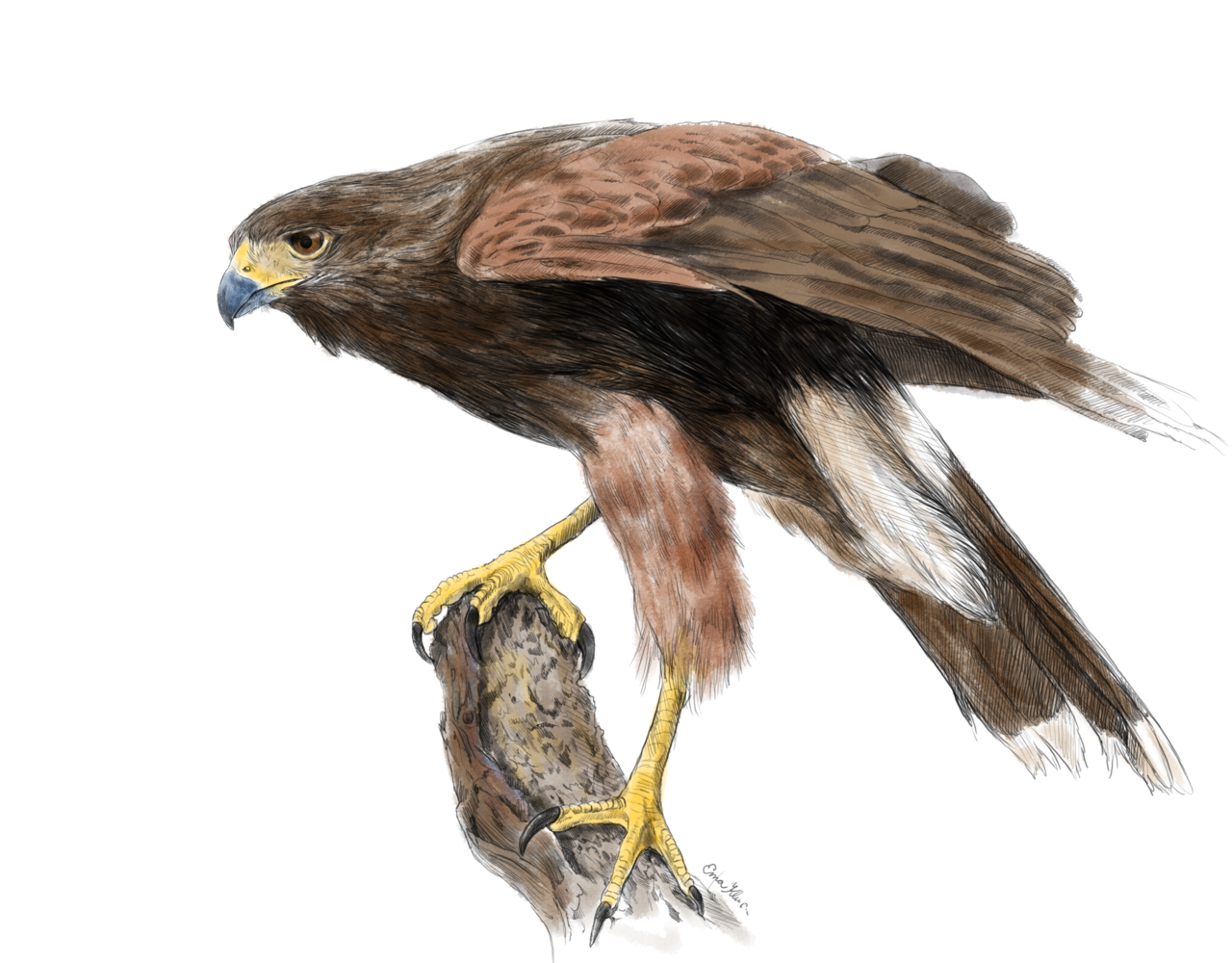 15-year-old prodigy girl draws amazingly well and trains falcons too